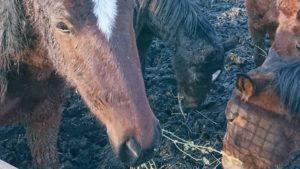 Ситуация критическая: в Запорожской области конный завод просит о помощи, — ФОТО