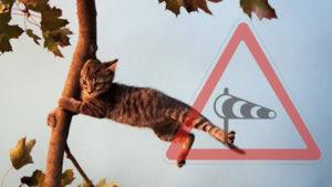 Запоріжців попереджають про посилення вітру