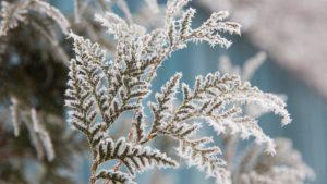 Внимание: к Запорожской области приближаются заморозки