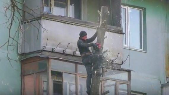 Героическая профессия: как в Запорожье пилят деревья на высоте, — ВИДЕО