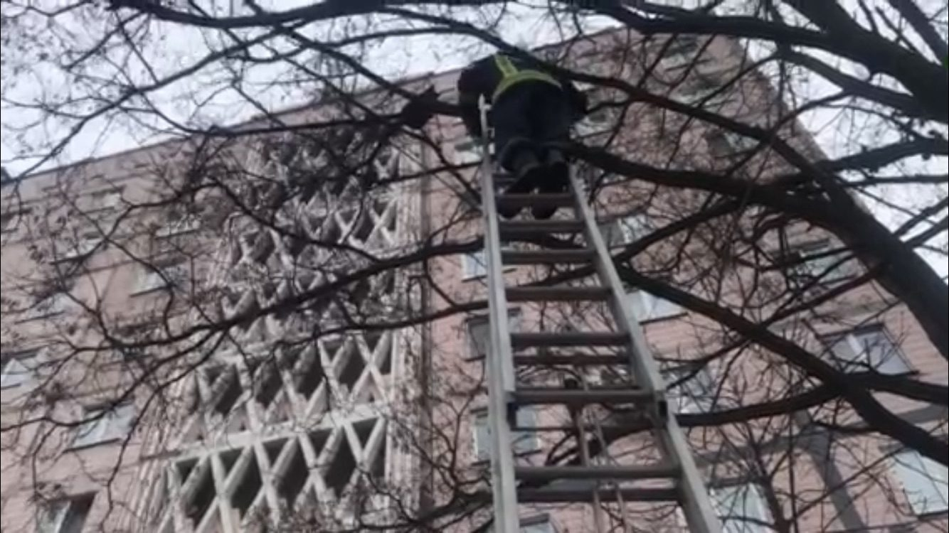 У Запоріжжі рятувальники зняли кота з дерева, – ФОТО
