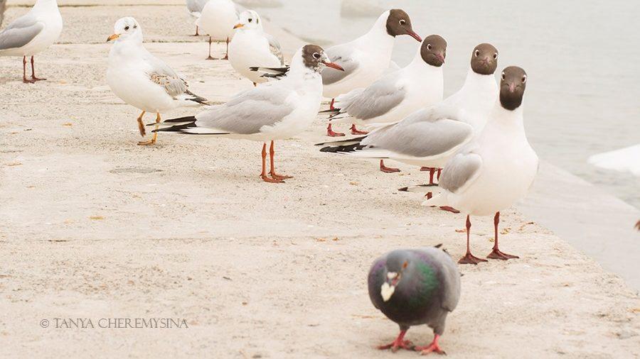Туман та чайки: бердянська фотографка поділилась знімками