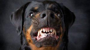 В Запорожье бойцовская собака в собственном доме напала на хозяев: пожилую женщину и мужчину