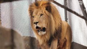 Необхідно 270 кг м'яса щодня: реабілітаційний центр для тварин у Василівці просить про допомогу