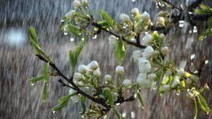 В Запоріжжі цього тижня почнеться дощова погода