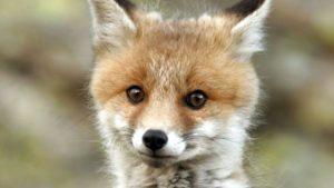 Запорожские ГСЧС-ники пришли на помощь маленькому хищнику, — ФОТО