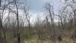 Жители Пологов жалуются на вырубку деревьев, — ФОТО