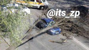 В Запорожье на автомобиль упало дерево: какие травмы получил водитель