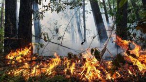 Увага: на території Запорізької області зберігається надзвичайна пожежна небезпека