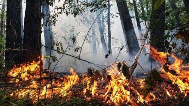 Внимание: на территории Запорожской области сохраняется чрезвычайная пожарная опасность