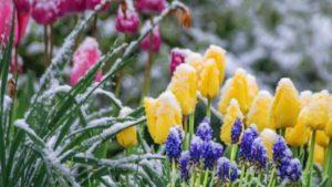 В Запорізькій області все ще тривають нічні заморозки
