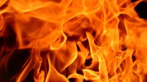 В Запорожской области из-за короткого замыкания едва не сгорело 500 живых поросят