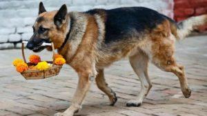 В Запорожье сняли собаку, которая помогает бабушке нести тяжелый пакет, — ВИДЕО