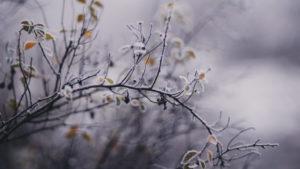 Запорожскую область не отпускают заморозки