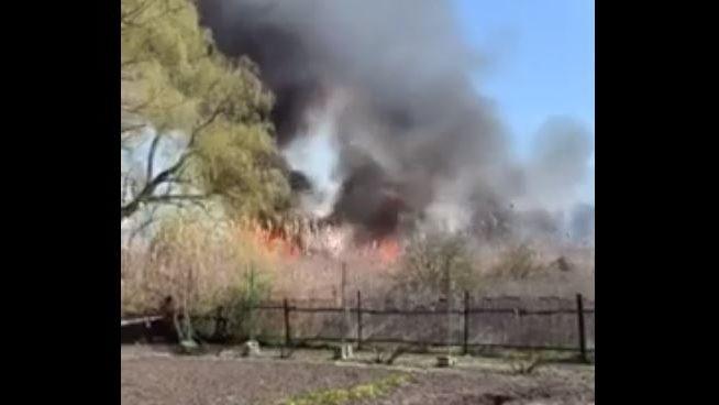 В селе Запорожской области местные подожгли камыш: погибли десятки животных и птиц, — ВИДЕО
