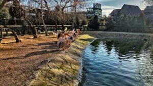 Бердянский зоопарк устроил онлайн-экскурсию