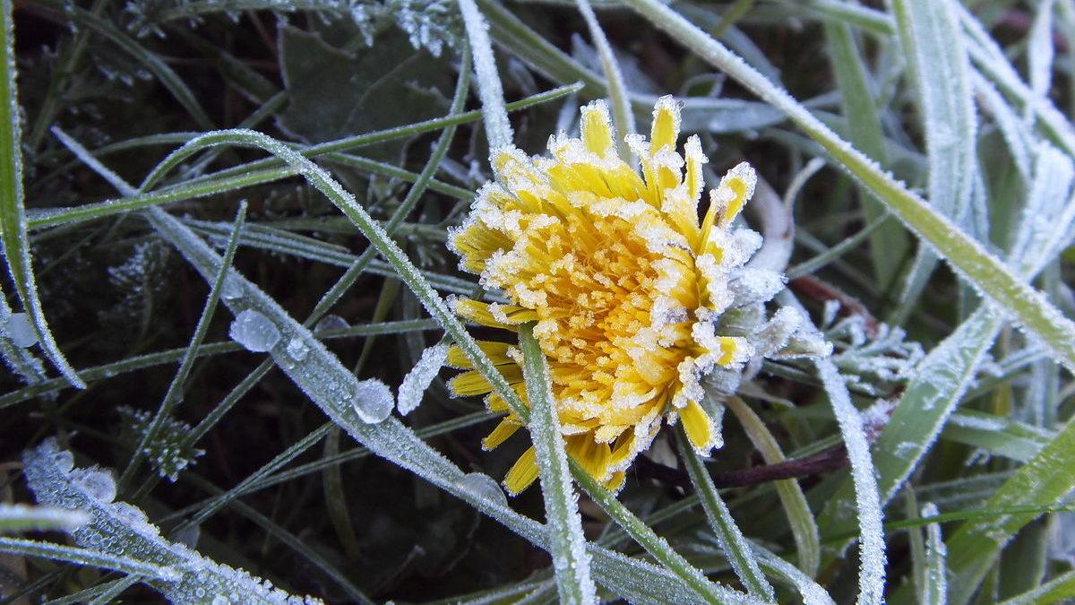 Перші квітневі вихідні в Запорізькій області почнуться з нічних заморозків
