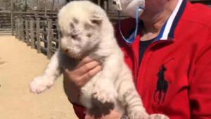 В бердянском зоопарке маленьких тигрят