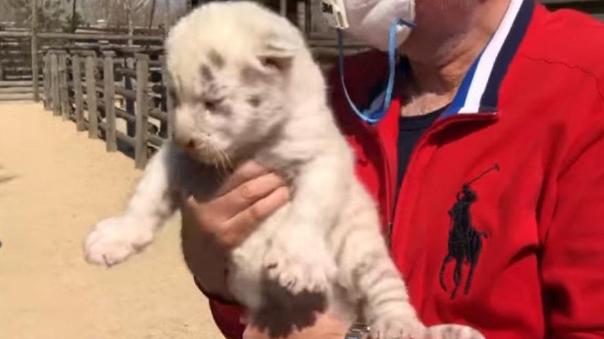 В бердянському зоопарку маленьких тигренят