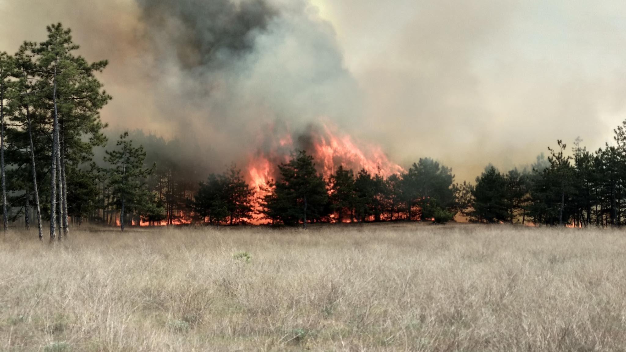 У Запорізькій області пожежа знищила 5 гектарів лісу: вогонь гасили 65 рятувальників, – ФОТО
