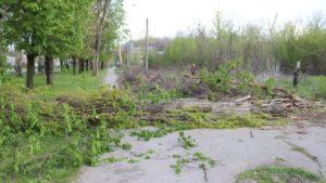 В Запорожье подрядчик завалил тополь на линии электросетей и оставил жителей поселка без электричества, – ФОТО