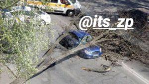 У центрі Запоріжжя на автомобіль під час руху впало дерево, – ФОТО