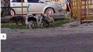 У Запорізькій області на 4-річного хлопчика напала зграя бродячих собак