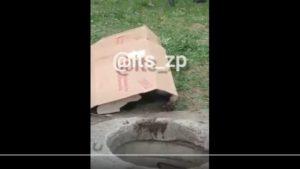 В центре Запорожья из колодца вытащили полуразложившийся труп, – ВИДЕО (+18)