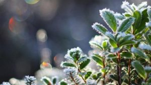 Запоріжців попереджають про заморозки