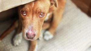 В Токмаку за підгодовування безпритульних тварин погрожують адміністративною відповідальністю