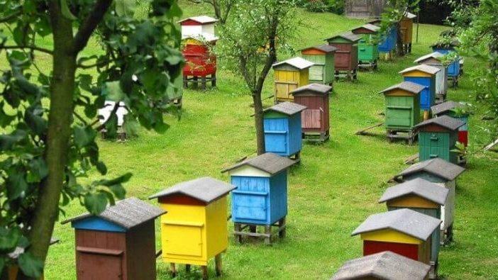 В Мелитополе Госпотребслужба провела проверку пасек: пчелы здоровы клинически