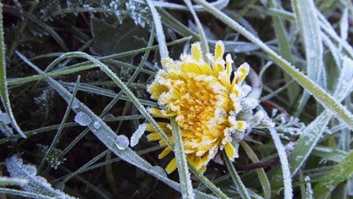Внимание: в Запорожье и области в выходные ожидаются ночные заморозки