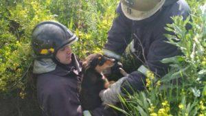 В Бердянске спасатели вытащили из колодца щенков, — ФОТО