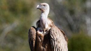 В бердянском зоопарке родилась хищная птица, — ВИДЕО