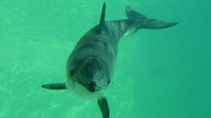 Почему в Азовском море гибнут дельфины