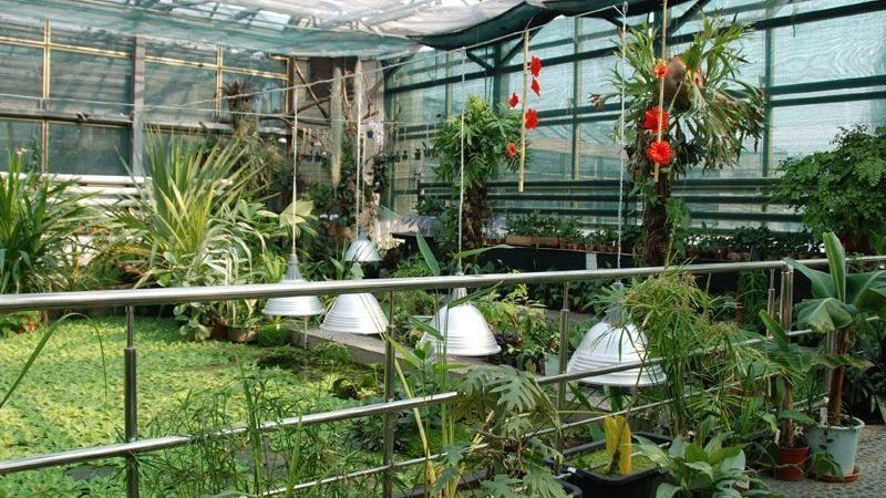 В Запорожье ботанический сад открыл двери для посетителей, но есть правила