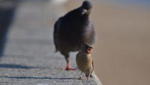 Пологівці помічають, що в місті масово гинуть горобці та голуби, — ФОТО