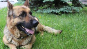 У Запорізькій області службовий пес за кілька годин розшукав злодія, –ФОТО