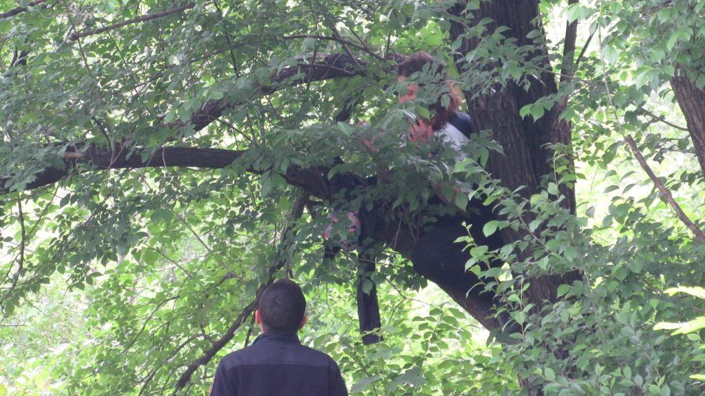 В Запорожье женщина залезла на дерево и собиралась покончить с собой, – ФОТО