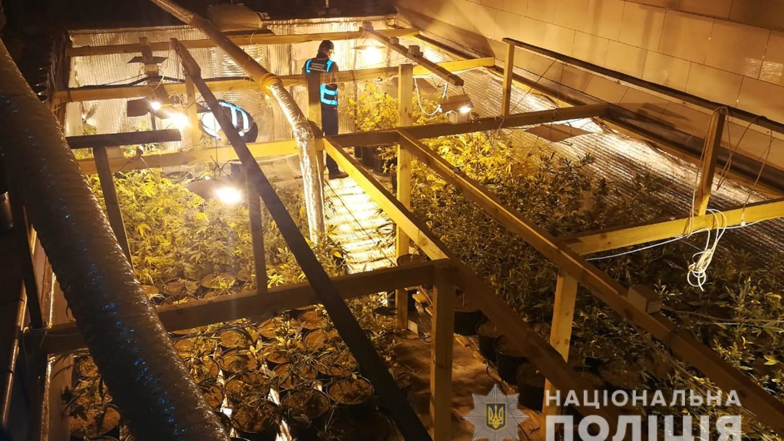 Житель Запорожской области вырастил у себя во дворе плантацию марихуаны, – ФОТО