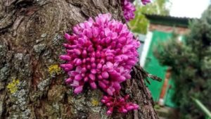 Весняна ніжність: які квіти цвітуть в ботанічному саду, — ФОТО