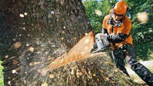 В Запорожье на Песках незаконно вырубают деревья