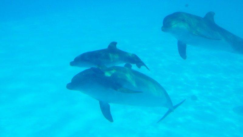 В Приазовском районе на берег выбросило маленького дельфиненка, — ФОТО