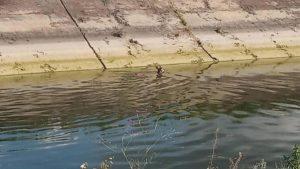 В селе Запорожской области правоохранители спасли косулю, — ФОТО