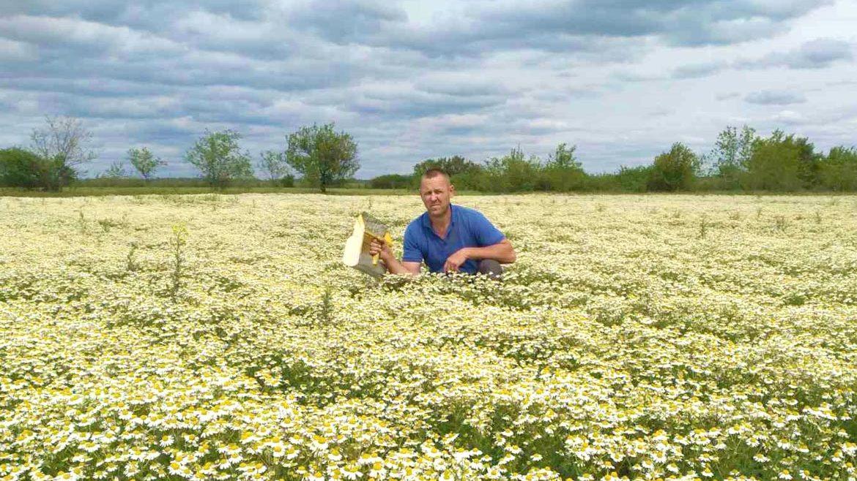 В Запорожской области семейная пара сделала прибыльный бизнес на продаже цветов ромашки, – ФОТО