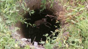 В Бердянске спасатели вытащили из колодца собаку, - ФОТО