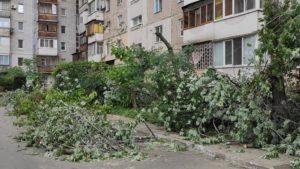 Голова запорізького ОСББ отримав протокол про адміністративне правопорушення за спил дерев