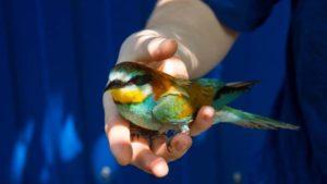 Запорожская зооволонтерка поселила у себя дома редкостную птицу, — ФОТО