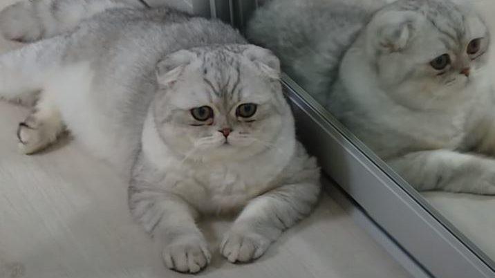 Кот из Запорожья получил титул самого красивого в мире, — ВИДЕО