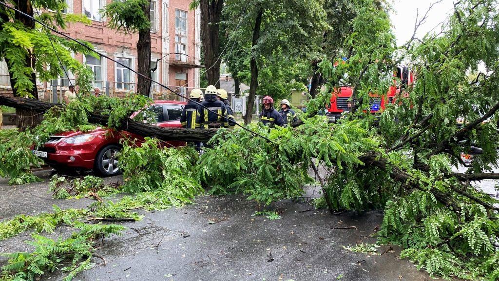 В центре Запорожья дерево рухнуло на два автомобиля, – ФОТО